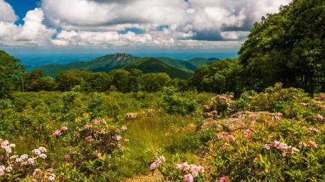 Laureles de montaña enmarcando una hermosa vista en el Shenandoah National Park