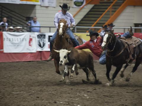 Cowboys competing for top honors at the Black Hills Stock Show & Rodeo