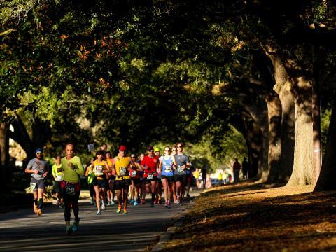 Running under oak trees in the Louisiana Marathon