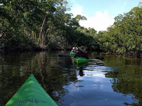 "Paseando en kayak en el J.N. ""Ding"" Darling National Wildlife Refuge en Sanibel Island, Florida"